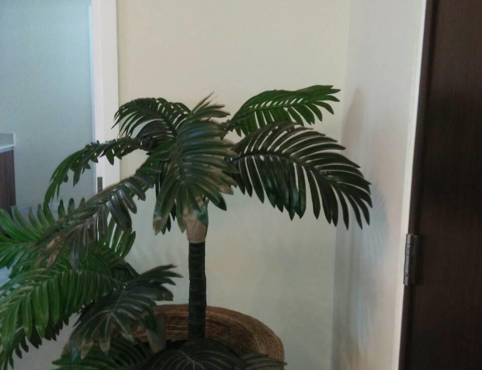 2 Bedrooms Condo, Shang Salcedo Place Plant