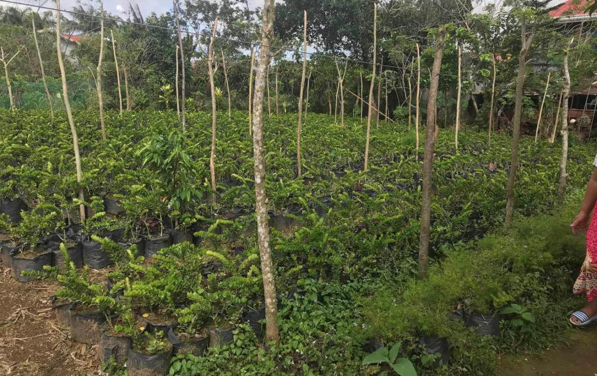 Agricultural Lot For Sale, Silang, Cavite 1
