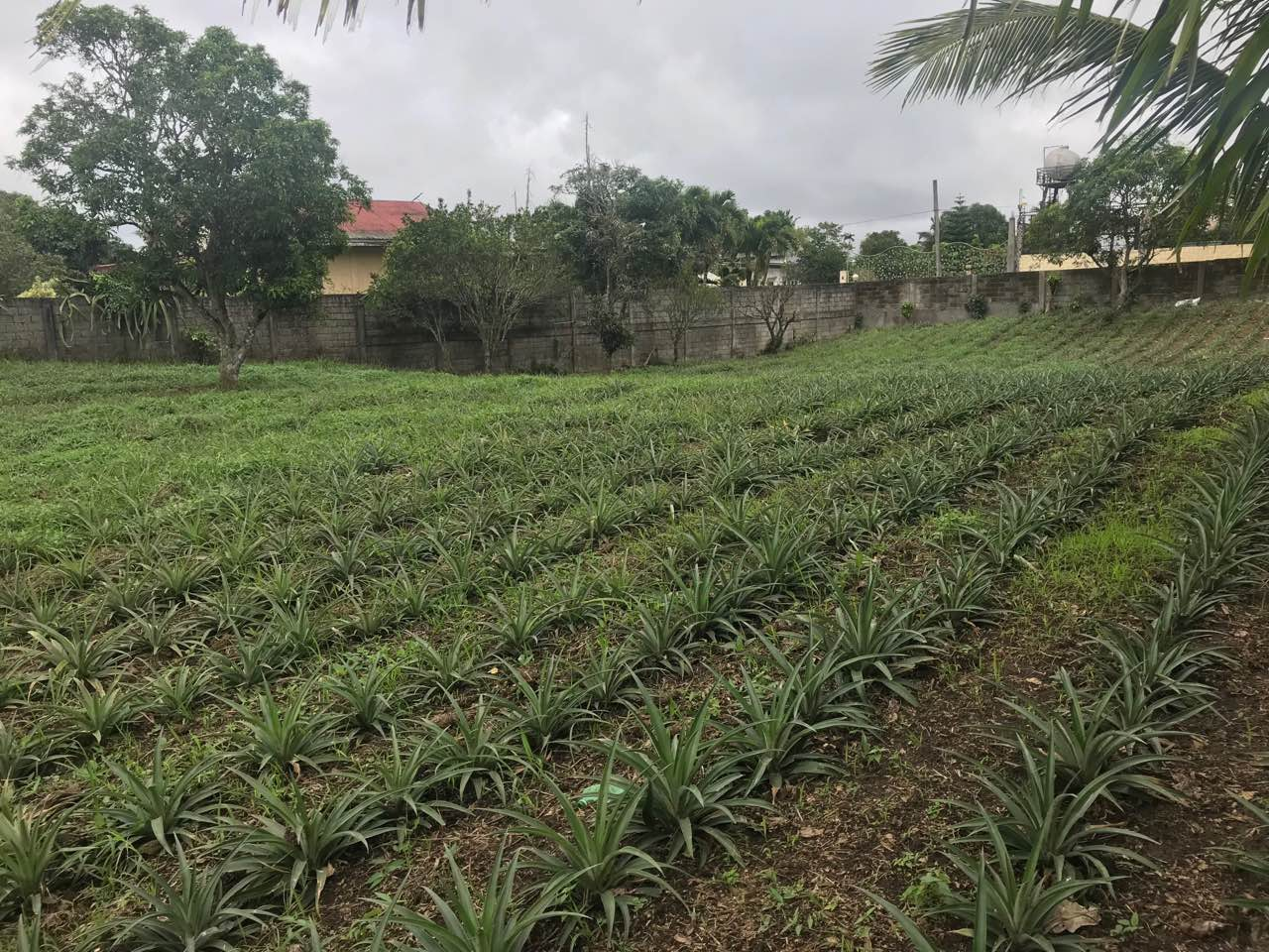Agricultural Lot For Sale, Silang, Cavite 7