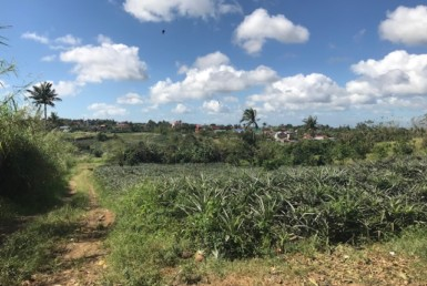 Agricultural Lot For Sale, Tolentino West, Tagaytay City