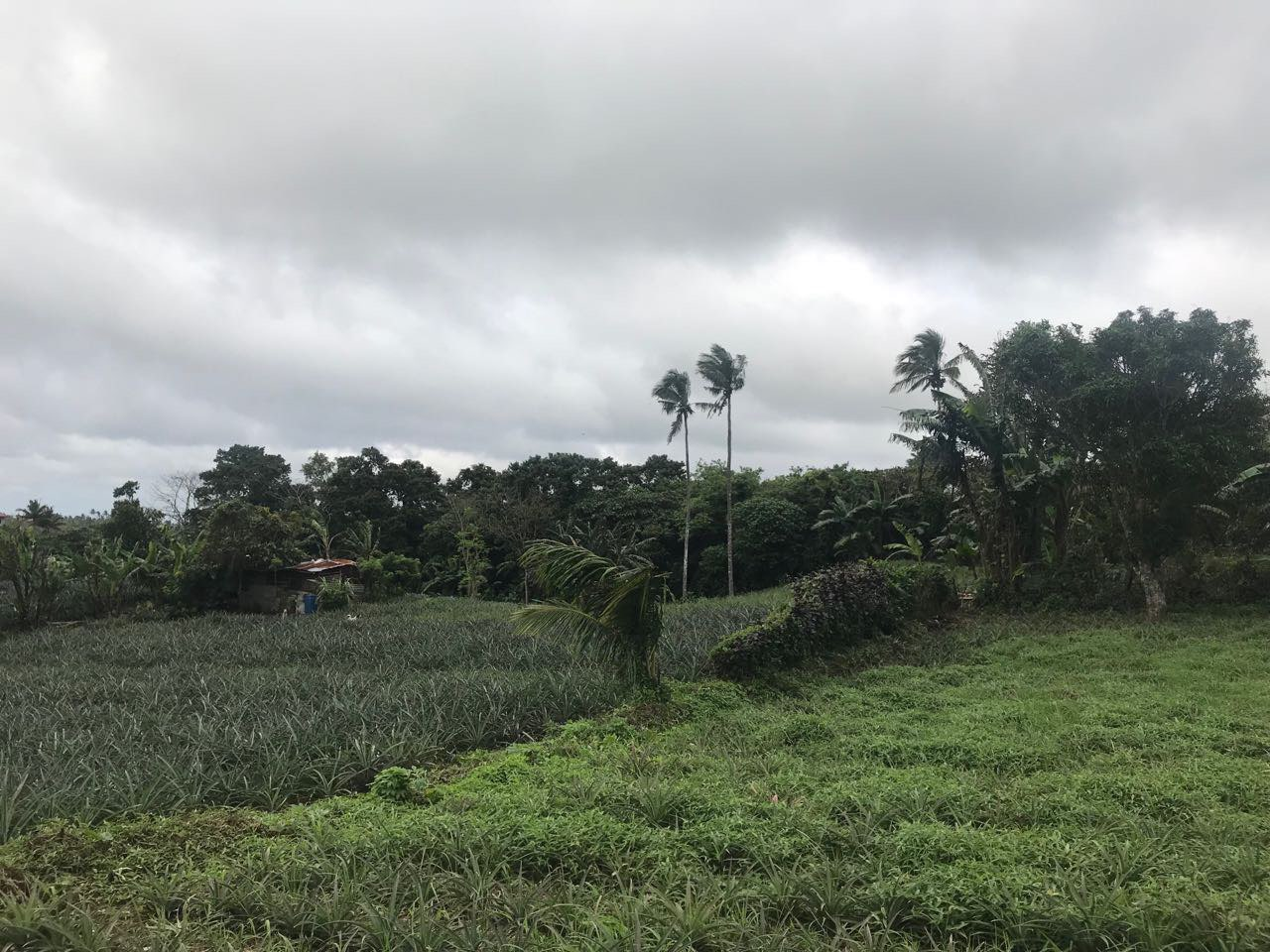 Agricultural Lot For Sale, Silang, Cavite 2