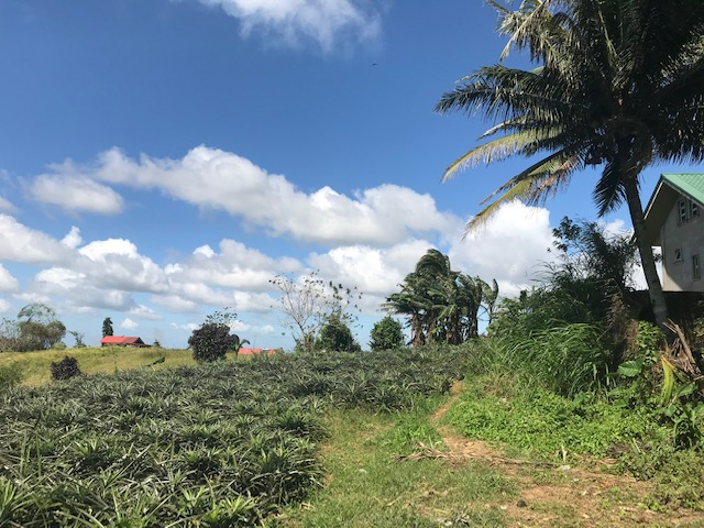 Agricultural Lot For Sale, Tolentino West, Tagaytay City 2