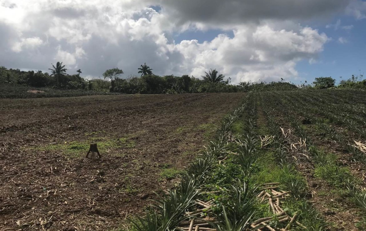 Agricultural Lot For Sale, Silang, Cavite 4