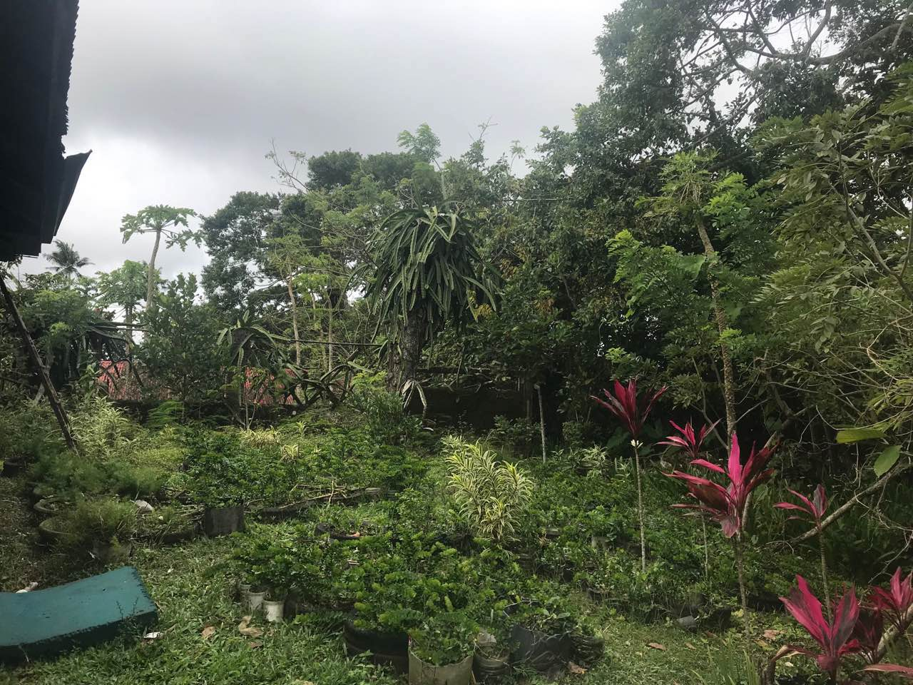 Agricultural Lot with Residential Building For Sale, Silang, Cavite 6