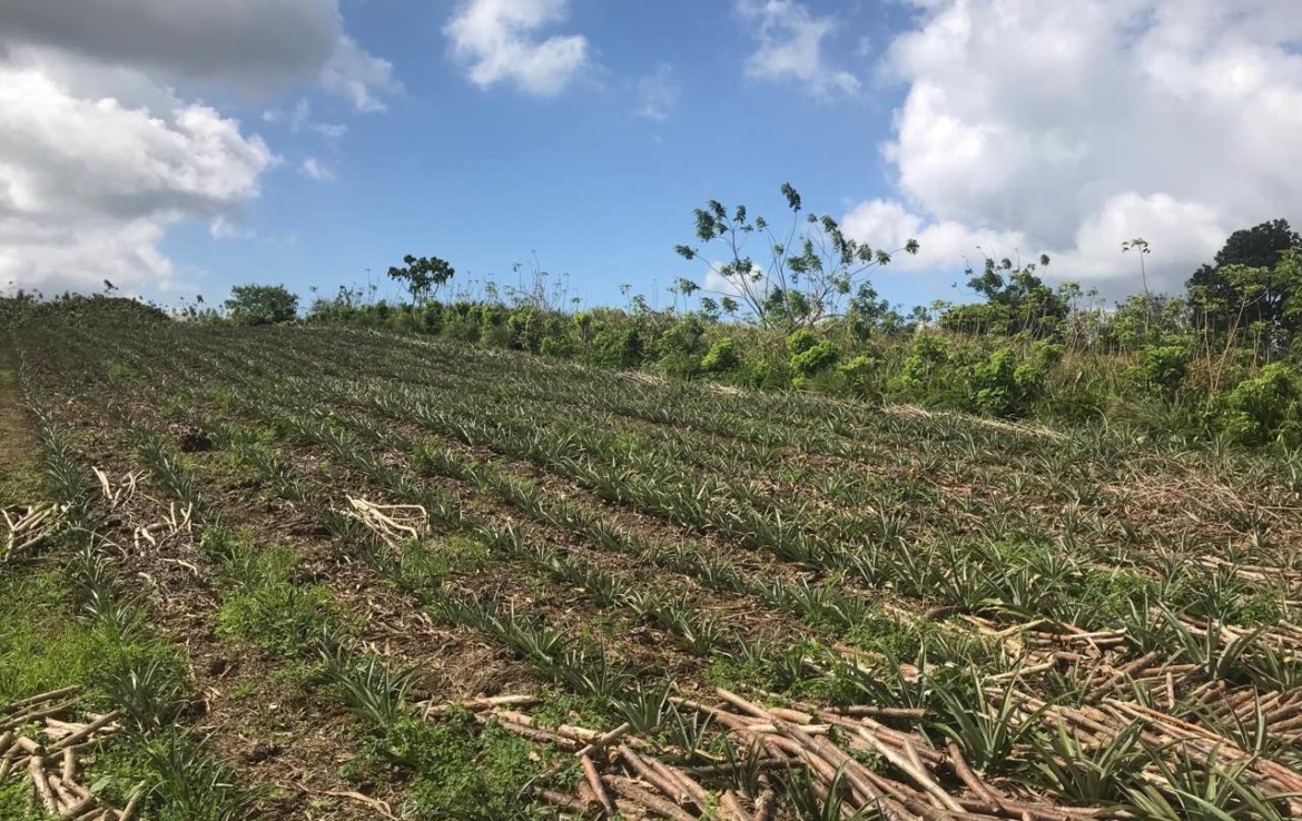 Agricultural Lot For Sale, Silang, Cavite 5