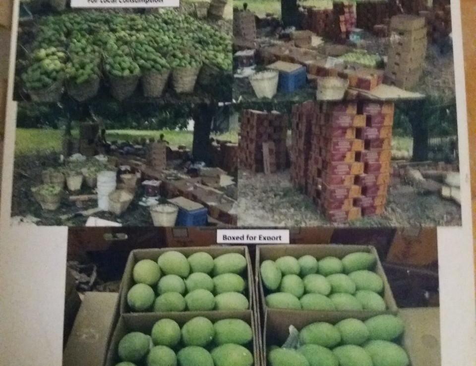 Lot For Sale, Balungao, Pangasinan 2