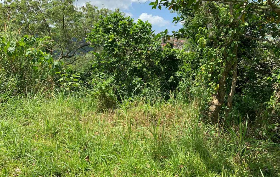Vacant Lot For Sale, St. Francis drive, Tolentino 2