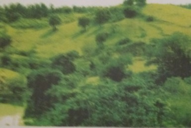Lot For Sale, Balungao, Pangasinan