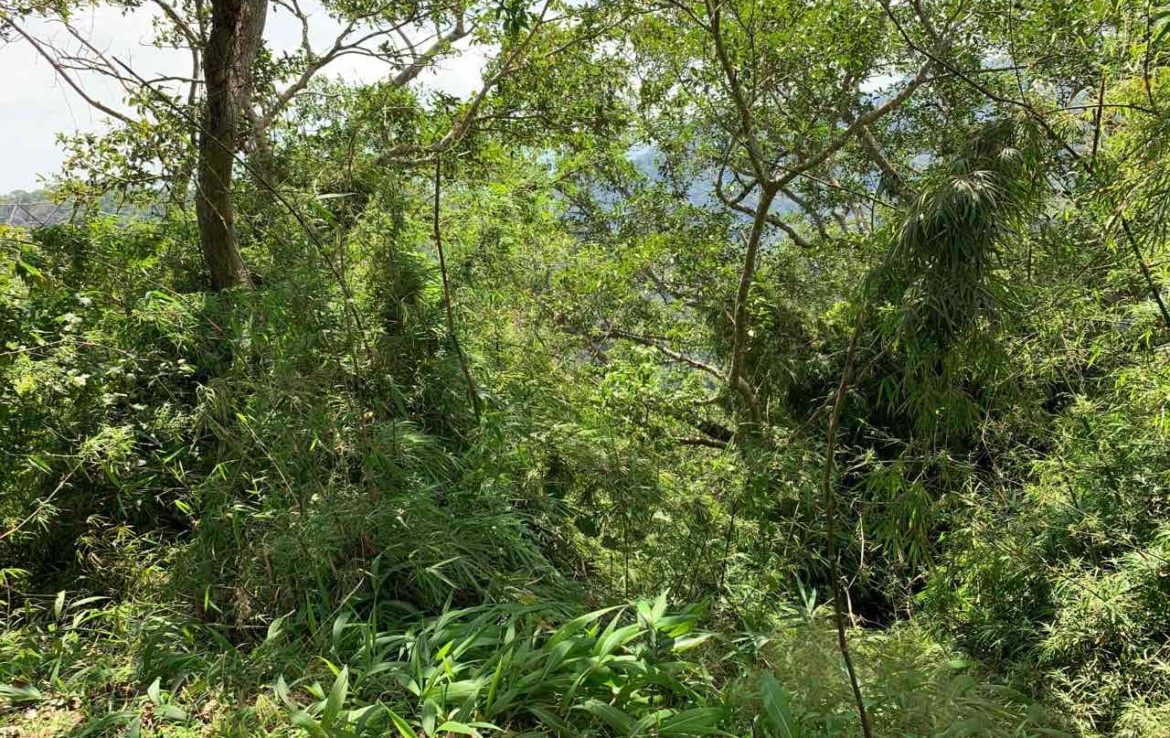 Vacant Lot For Sale, St. Francis drive, Tolentino 4