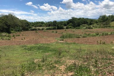 Farm Lot For Sale at Umingan, Pangasinan