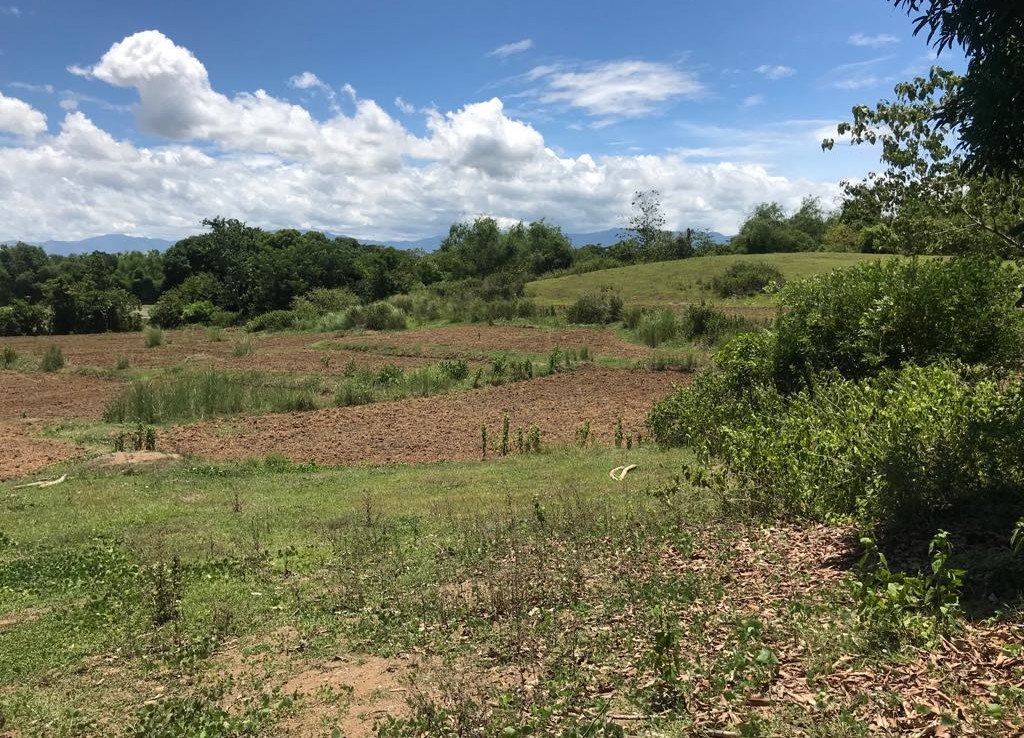 Farm Lot For Sale at Umingan 2